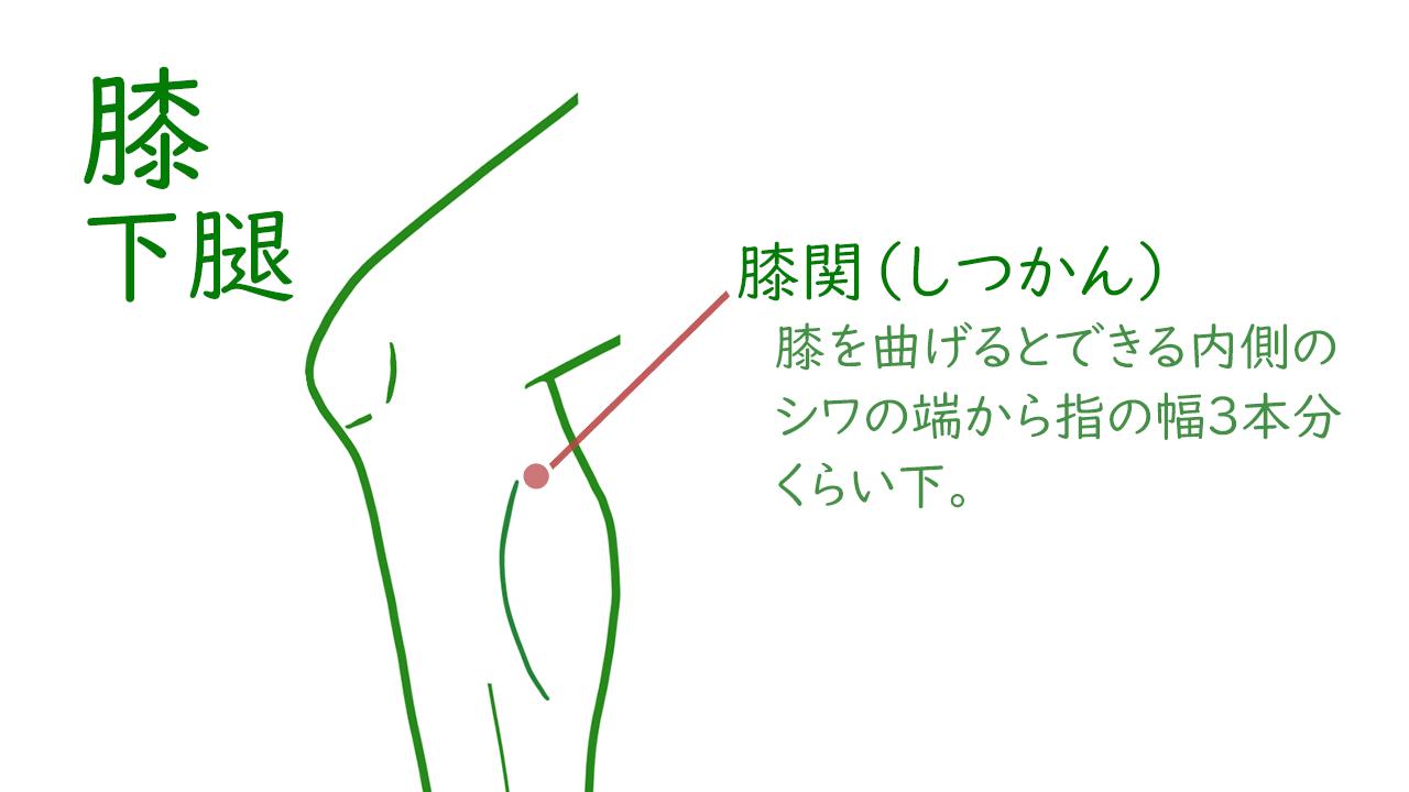 膝および下腿のツボ2